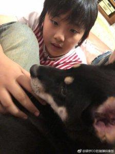 吴镇宇晒儿子近照又变圆润 费曼和狗玩耍爱心满满